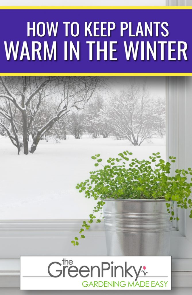 A plant is kept warm in the winder by being indoors.