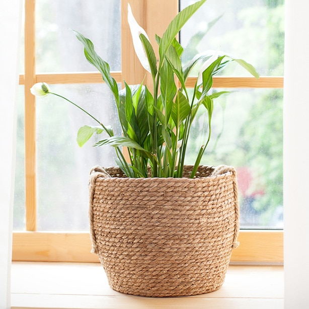 A houseplant inside on a cold winter day