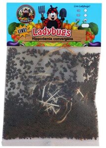 Ladybugs are beneficial insects that can be bought on Amazon to control them.