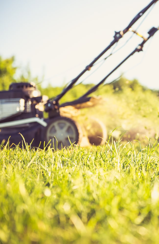 Time the application of lawn sand after mowing