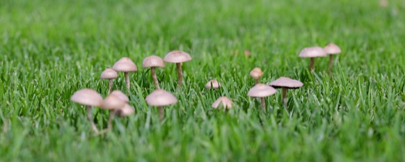 Getting rid of lawn mushrooms can be difficult without instructions
