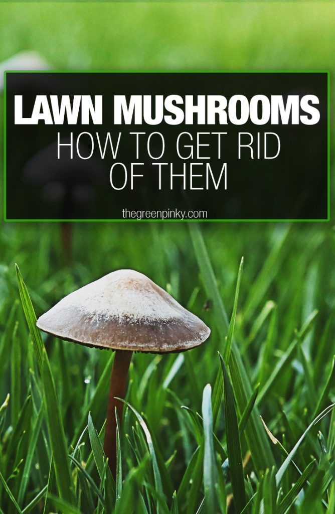 Lawn mushrooms symbolize bigger problems and need a guide to get rid of them.