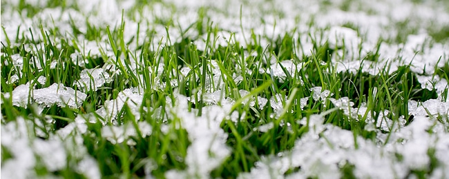 Lawn covered by snow from the cold season