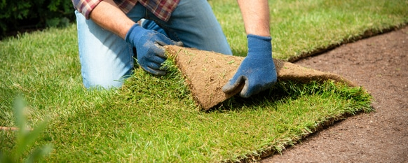 Laying down sod with the proper fertilization