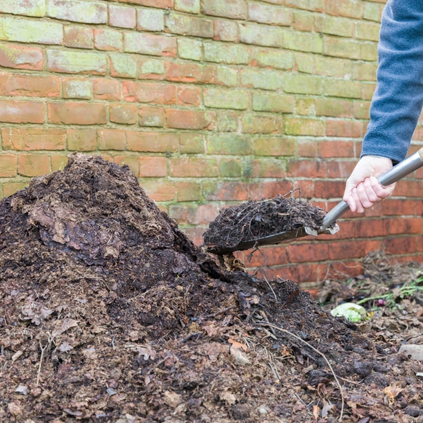 Using leaf mold is an excellent way to add nutrients to the soil at no cost.