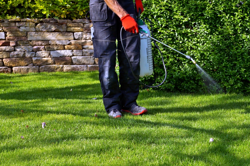 A man is holding a sprayer and spraying fertilizer on his lawn
