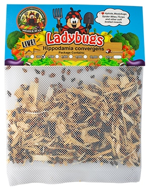 Nature good guys' live lady bugs are natural predators to thrips