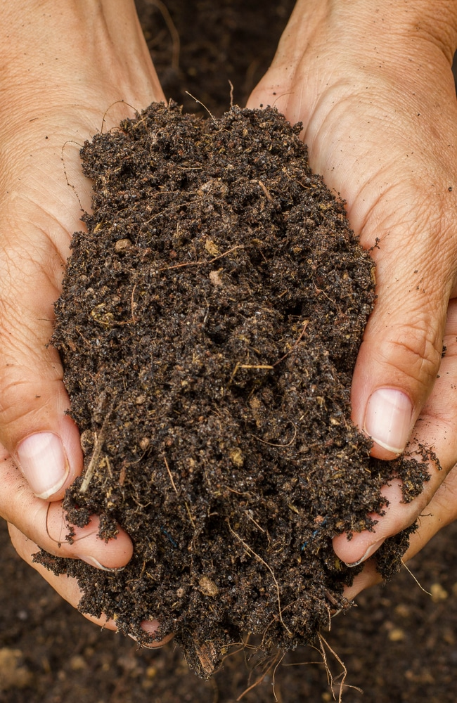 living soil is filled with microorganisms