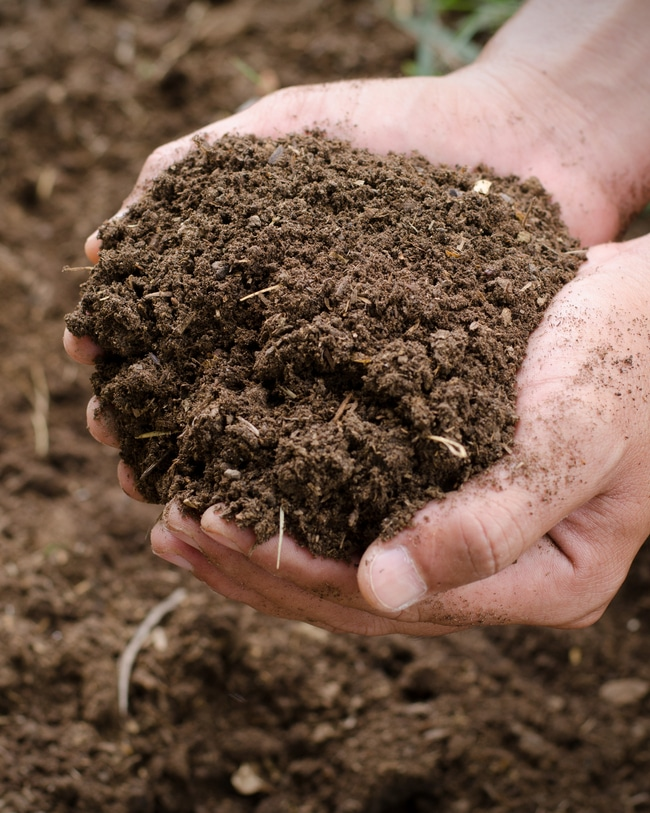 Compost added to soil creates a nutrient-rich soil.