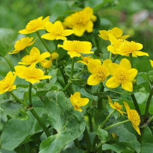 Marigolds are a classic flower in these types of areas.