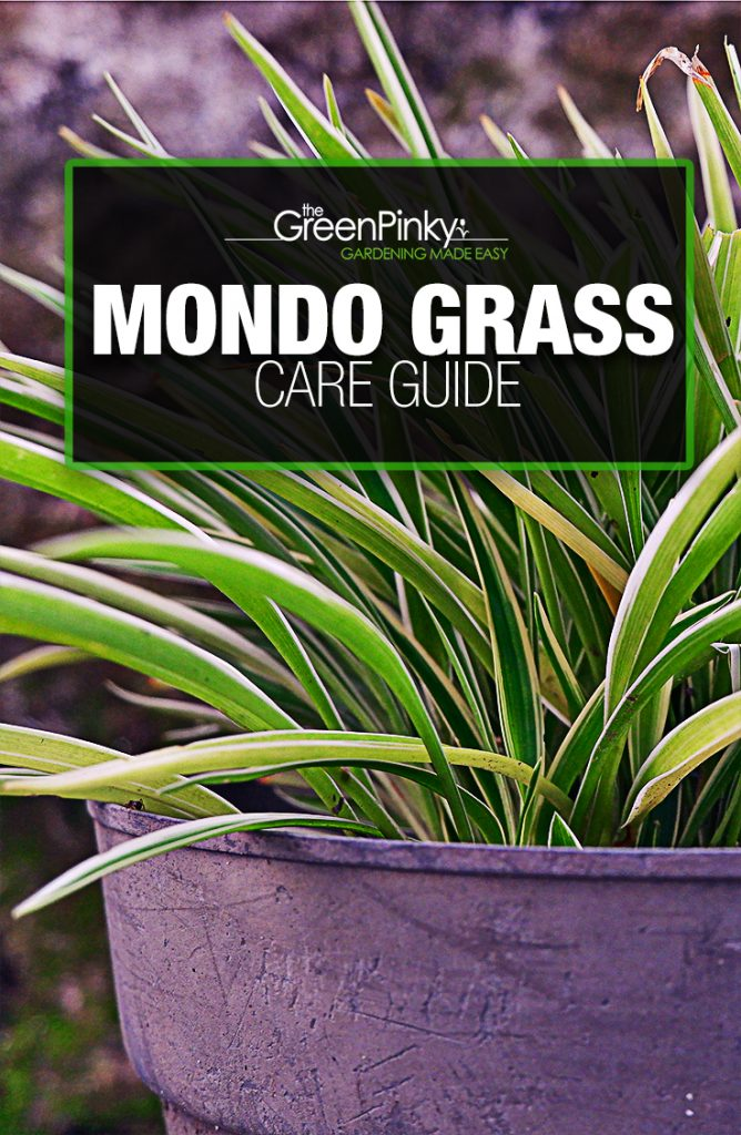 Maintaining mondo grass will result in a beautiful property