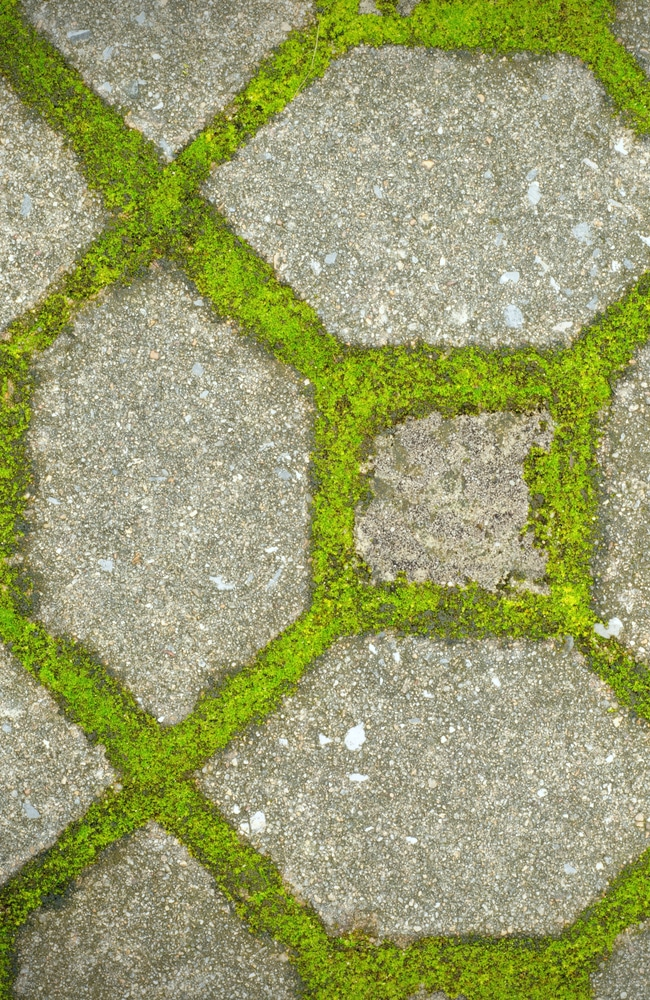 Moss can be seen growing between pavers.