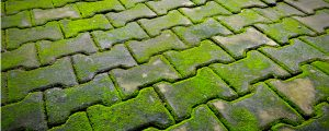 Moss covering cement ground needs to be removed