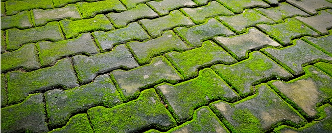 Remove Moss from Concrete: 6 Different Methods