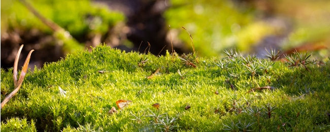 Moss growing on lawn symbolizes further maintenance issues
