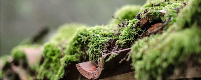 Moss is growing rampant on roof and needs to be removed