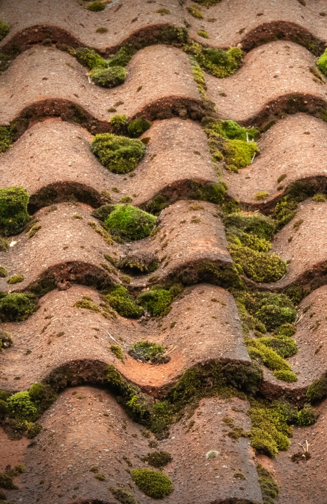 Moss on roof causes poor aesthetics and decreases home value
