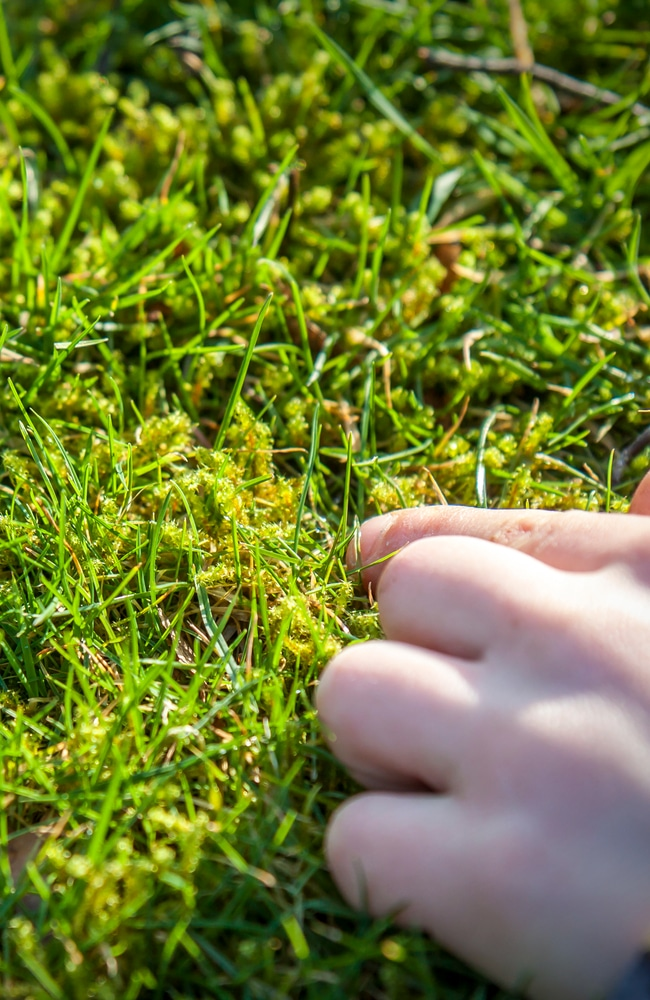 Mossy lawns need to be fixed as soon as possible