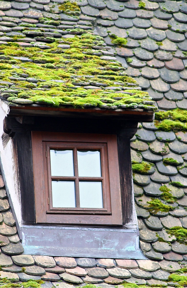 Moss growing on a roof that needs to be removed