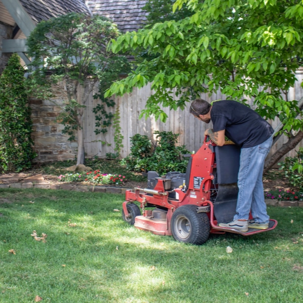 Allowing shaded grass to grow longer can prevent powdery mildew