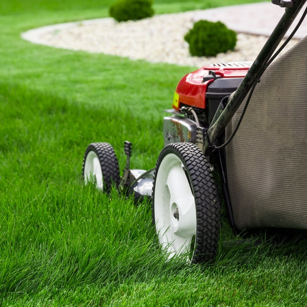 Mowing your lawn appropriately will allow for ideal health