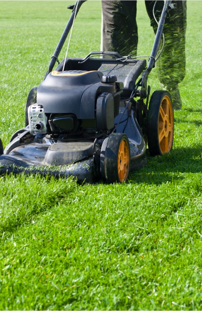 Mowing your lawn can help fix your flea problem