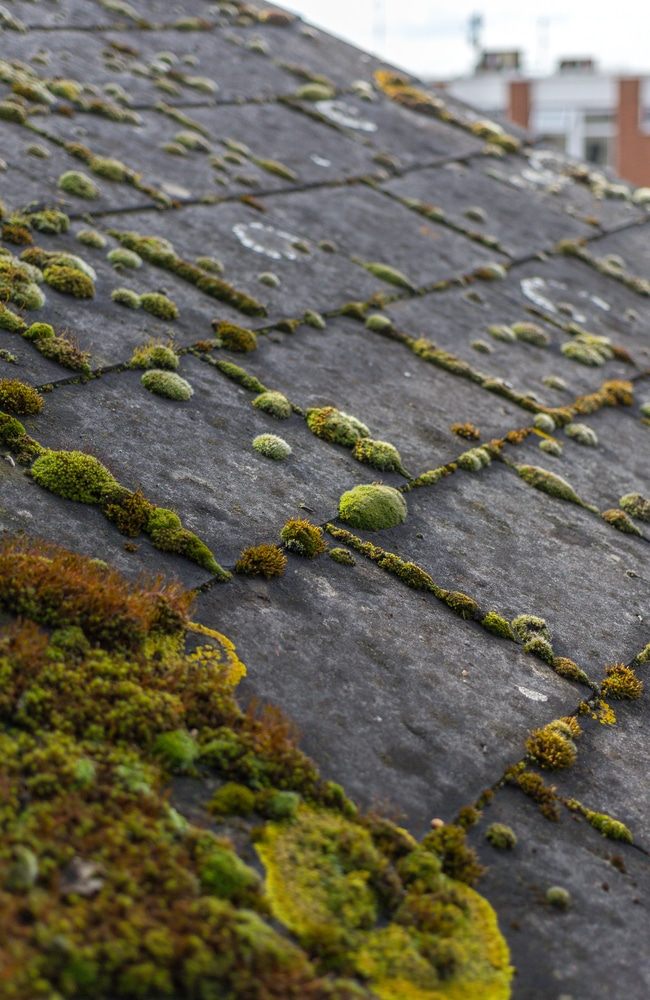 If moss is allowed to grow rampant, the roof will need rennovation