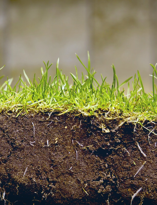 New sod requires proper installing instructions to establish roots