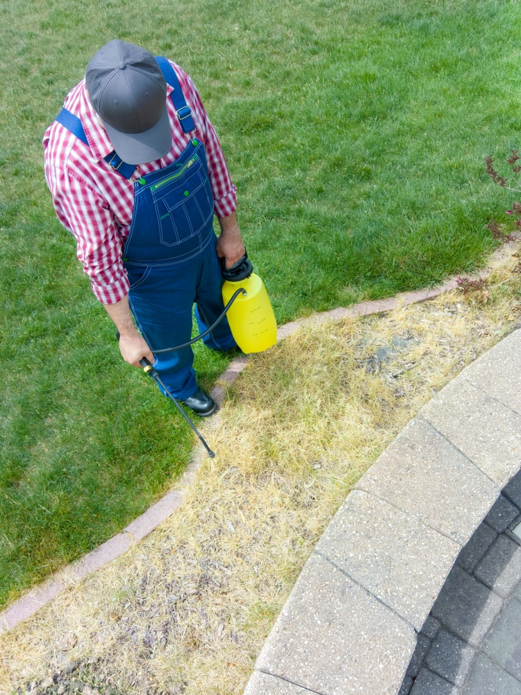Certain weed killers are non-specific and kill weed and grass alike. A man is spraying a bunch of dead grass with weed killer