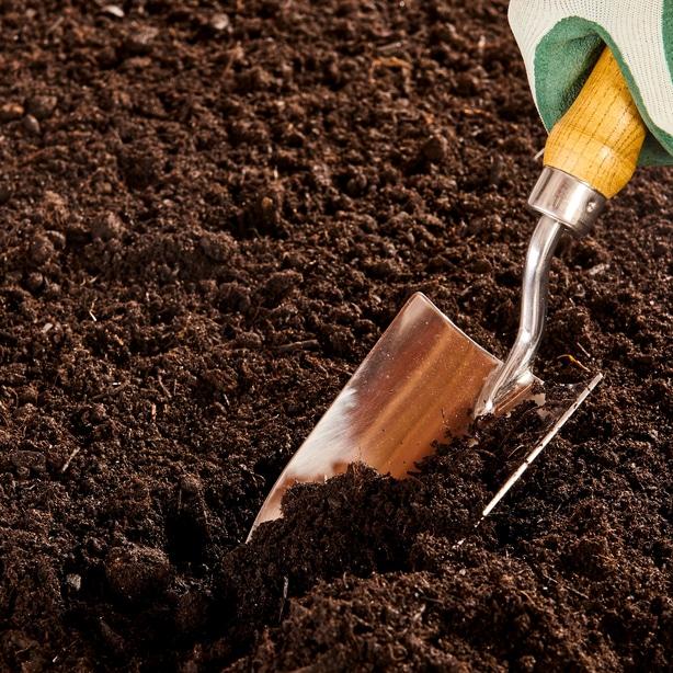 Preparing soil to plant onions.