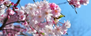 Pastel pink and white flowers fill the canopy