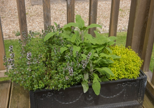 Planters on patios or porches make for wonderful small gardens
