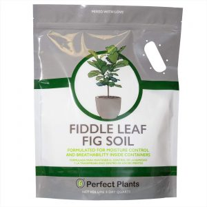 Best dirt will allow for proper aeration for ficus lyrata