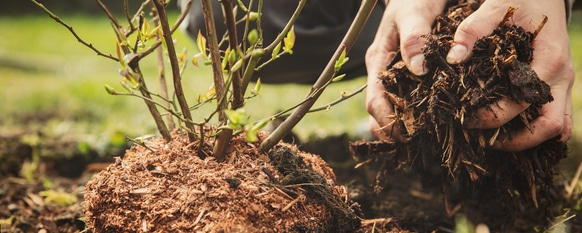 Planting requires a guide to help ensure success