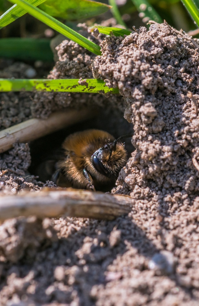 Reconsider using insecticide to get rid of bees