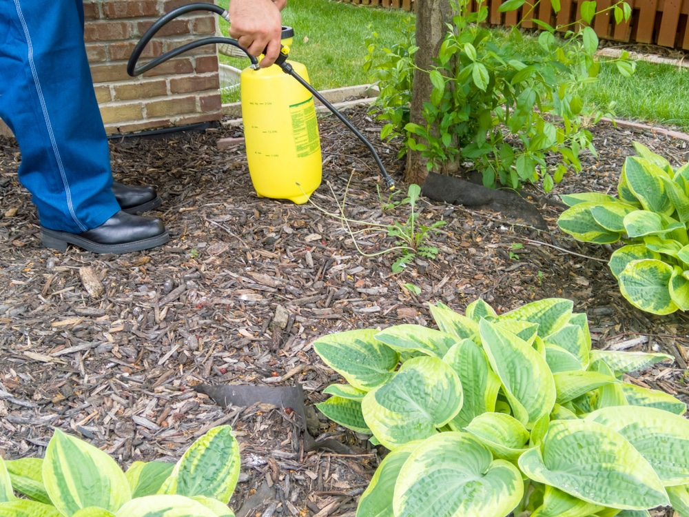 A man with a yellow container spraying post-emergent weed killers on weeds.