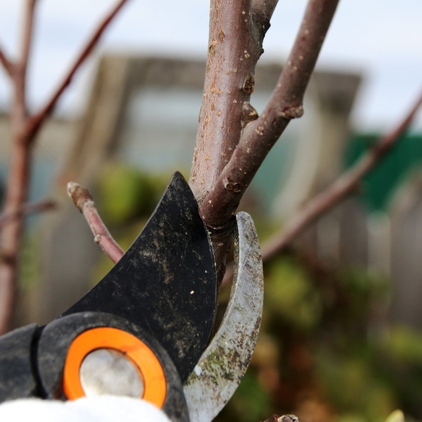 Pruners are a necessary tool in this process.