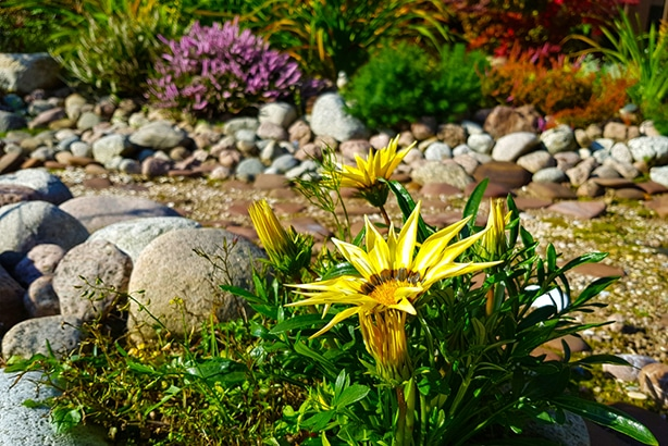 Rain garden or creek beds are beautiful design ideas to fix water issues.