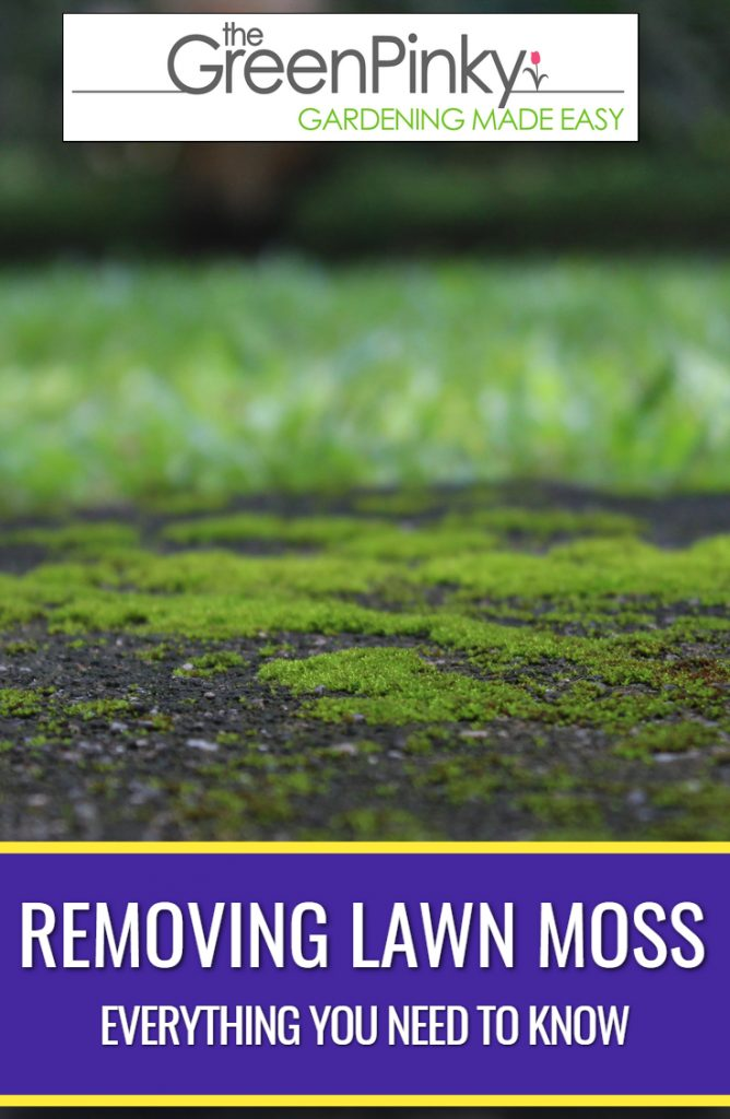 Removing lawn moss properly requires a guide.