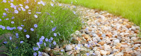 Rock vs Mulch — Which One is Better?