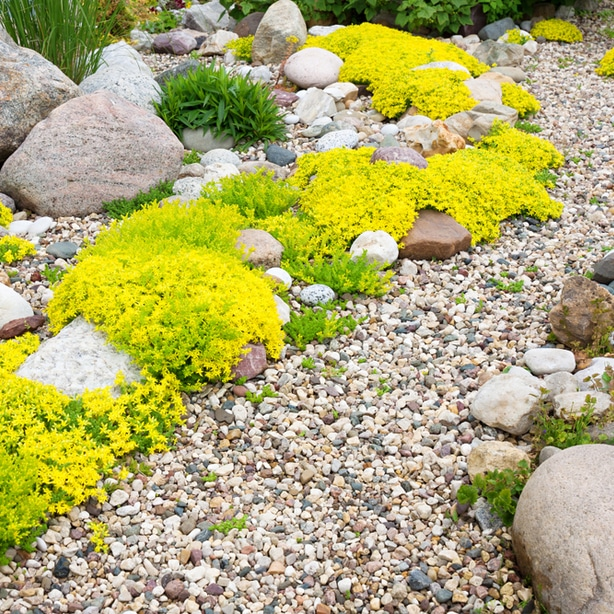 Rock can be seen instead of organic mulch.