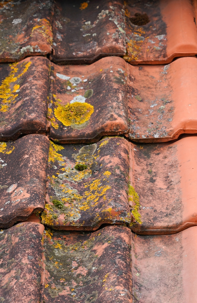 Stains caused by algae on a red shingle roof