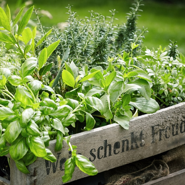Companion planting is always a good idea for rosemary.