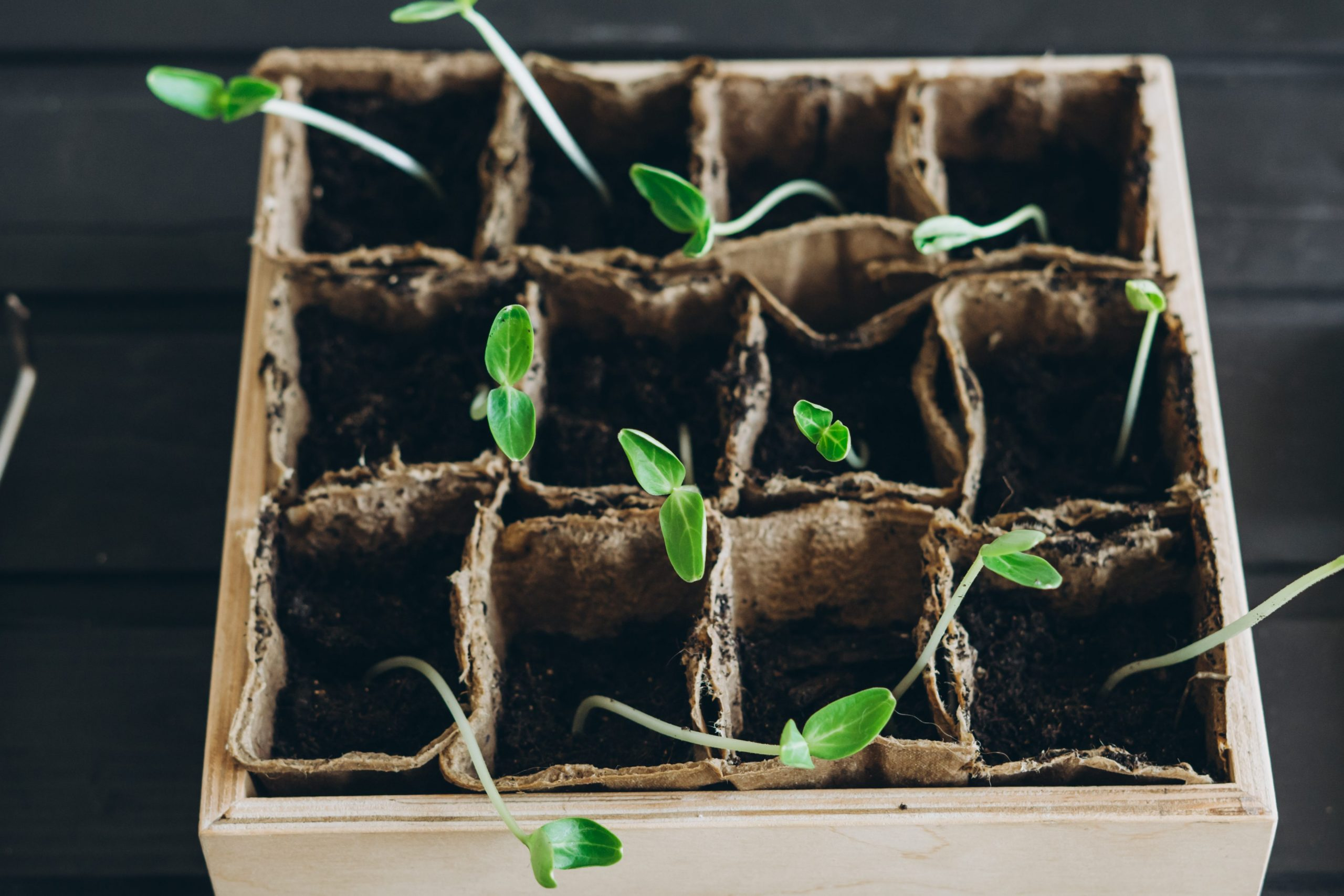 A small box of seedlings