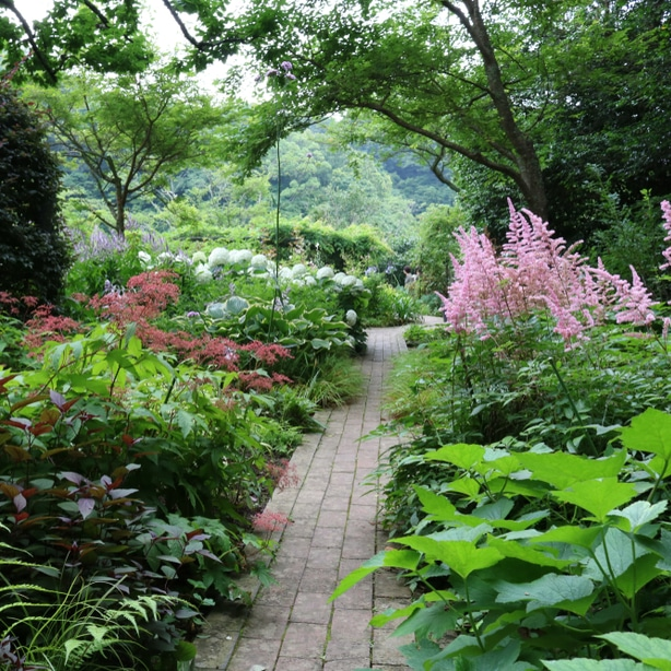 shadowed pathway makes the perfect area for a garden