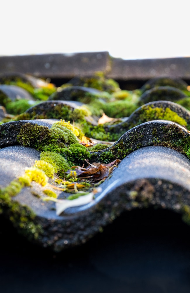 Shingles with moss that needs to be properly maintained