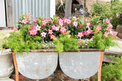 Showcase your plants and help them grow in beautiful trough planters