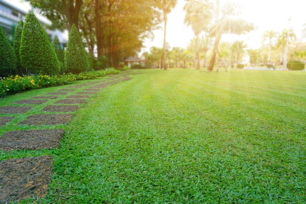A beautiful lawn that looks luscious and green with the sun setting in the background.