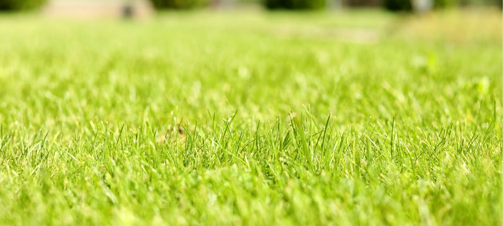 A beautiful green lawn