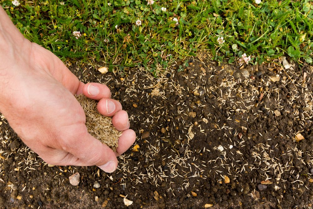 A hand spreading seeds in the dirt